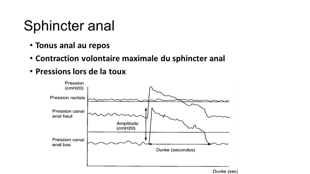 Innervation du sphincter anal externe