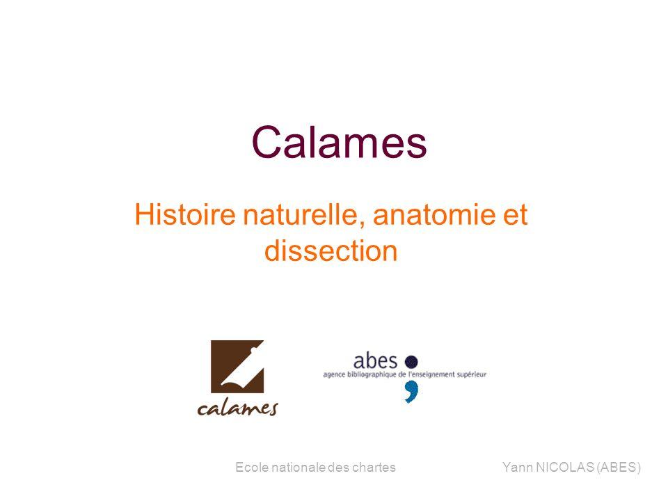 sss Histoire naturelle, anatomie et dissection