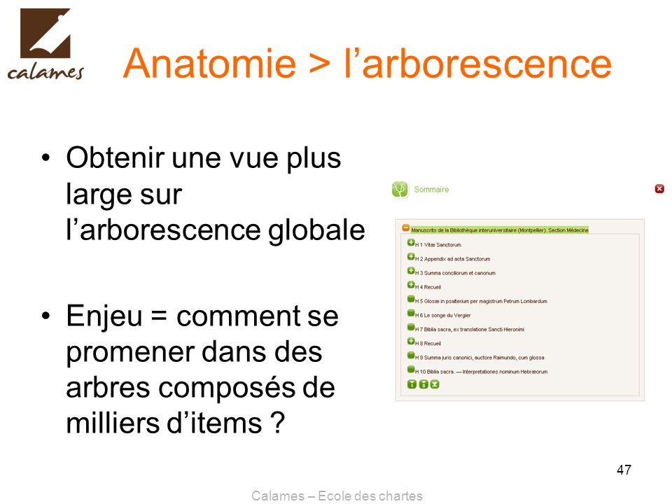 Anatomie > l'arborescence