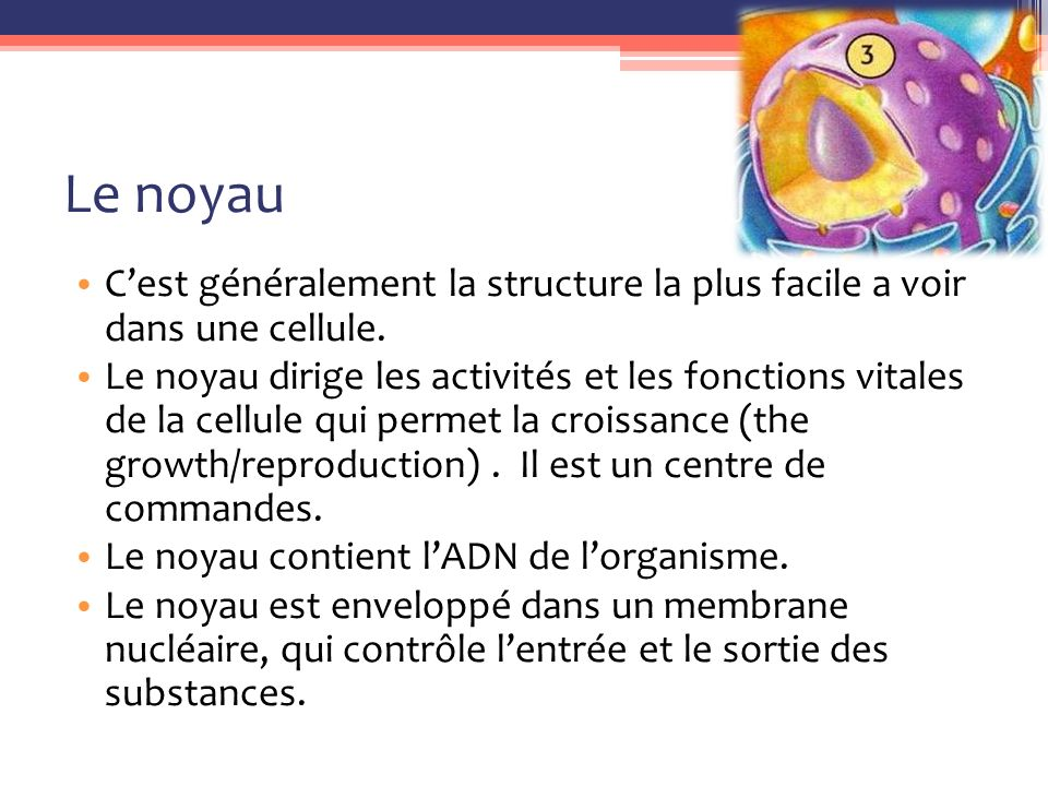 Le noyau C'est généralement la structure la plus facile a voir dans une cellule.