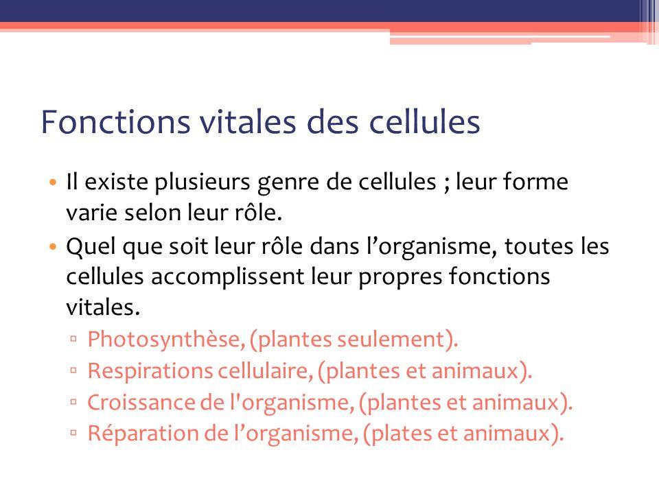 Fonctions vitales des cellules