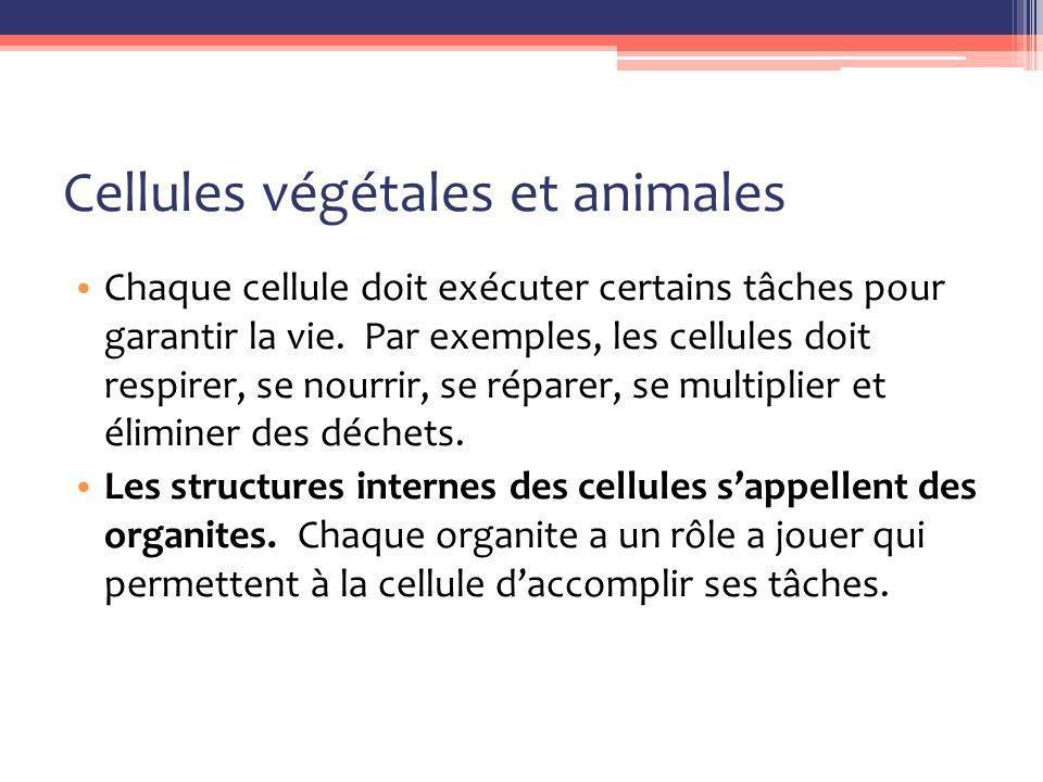Cellules végétales et animales