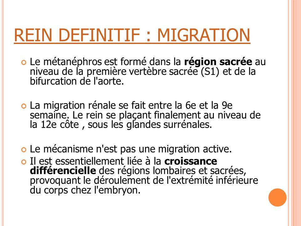 REIN DEFINITIF : MIGRATION