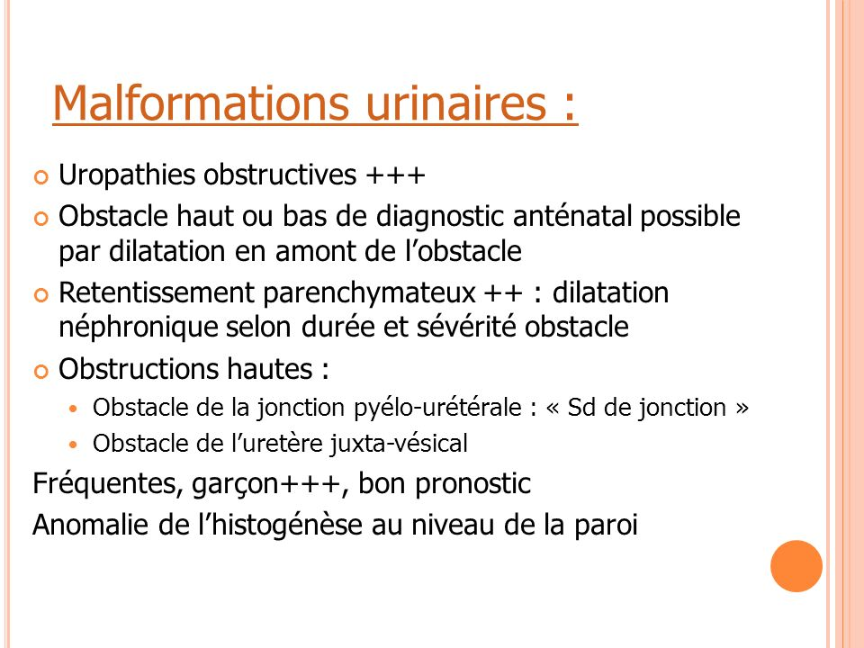 Malformations urinaires :