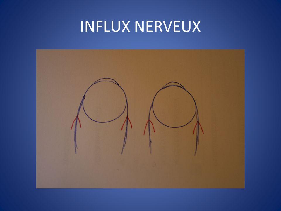 Le lancaster ppt video online t l charger for Influx nerveux