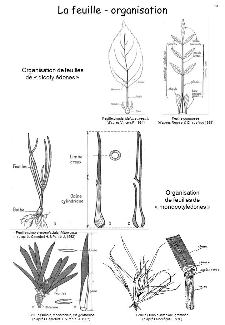 La feuille - organisation