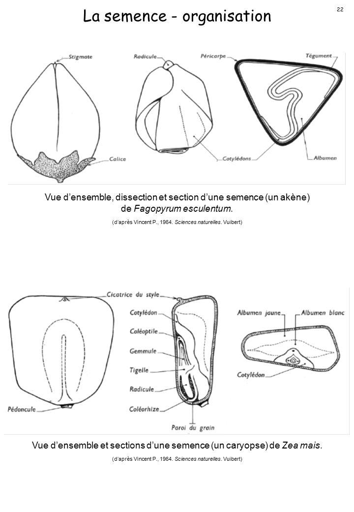 La semence - organisation