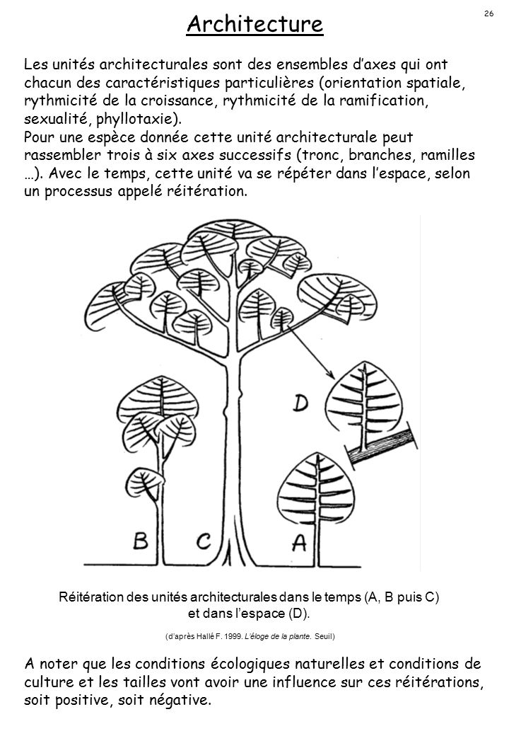 (d'après Hallé F. 1999. L'éloge de la plante. Seuil)