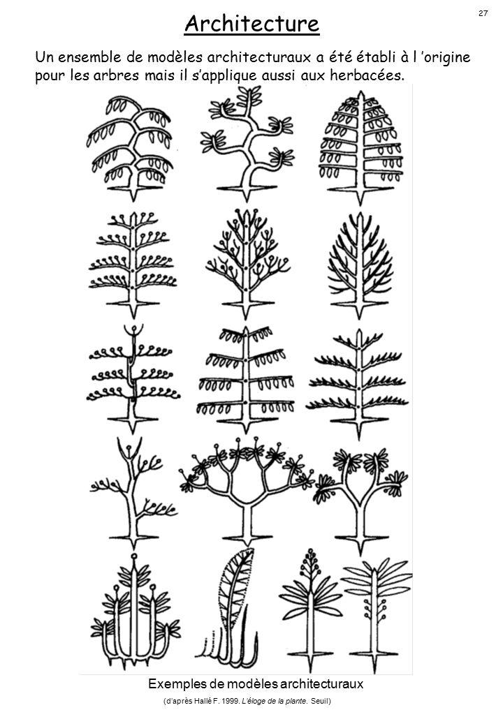 Architecture 27. Un ensemble de modèles architecturaux a été établi à l 'origine pour les arbres mais il s'applique aussi aux herbacées.