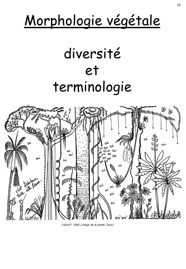 (Hallé F. 1999. L'éloge de la plante. Seuil)