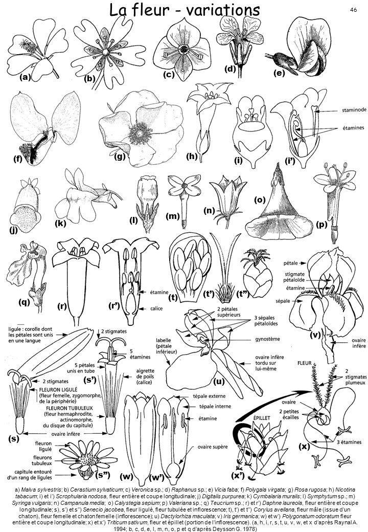La fleur - variations (a) (b) (c) (d) (e) (f) (g) (h) (i) (i') (j) (k)