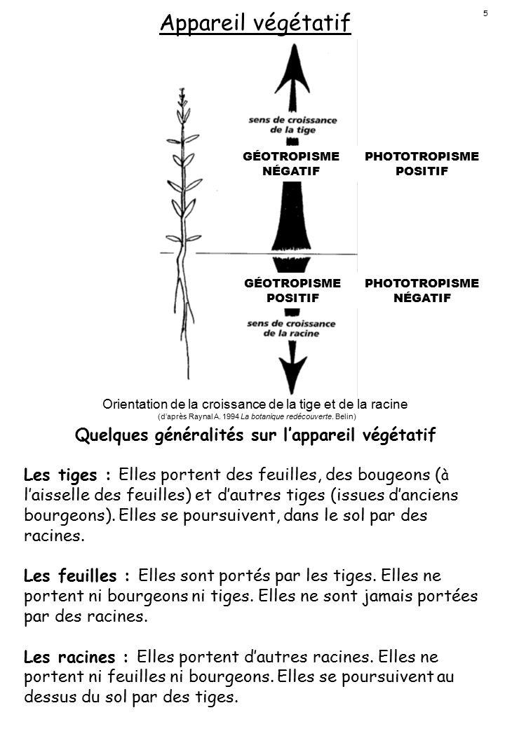 Quelques généralités sur l'appareil végétatif