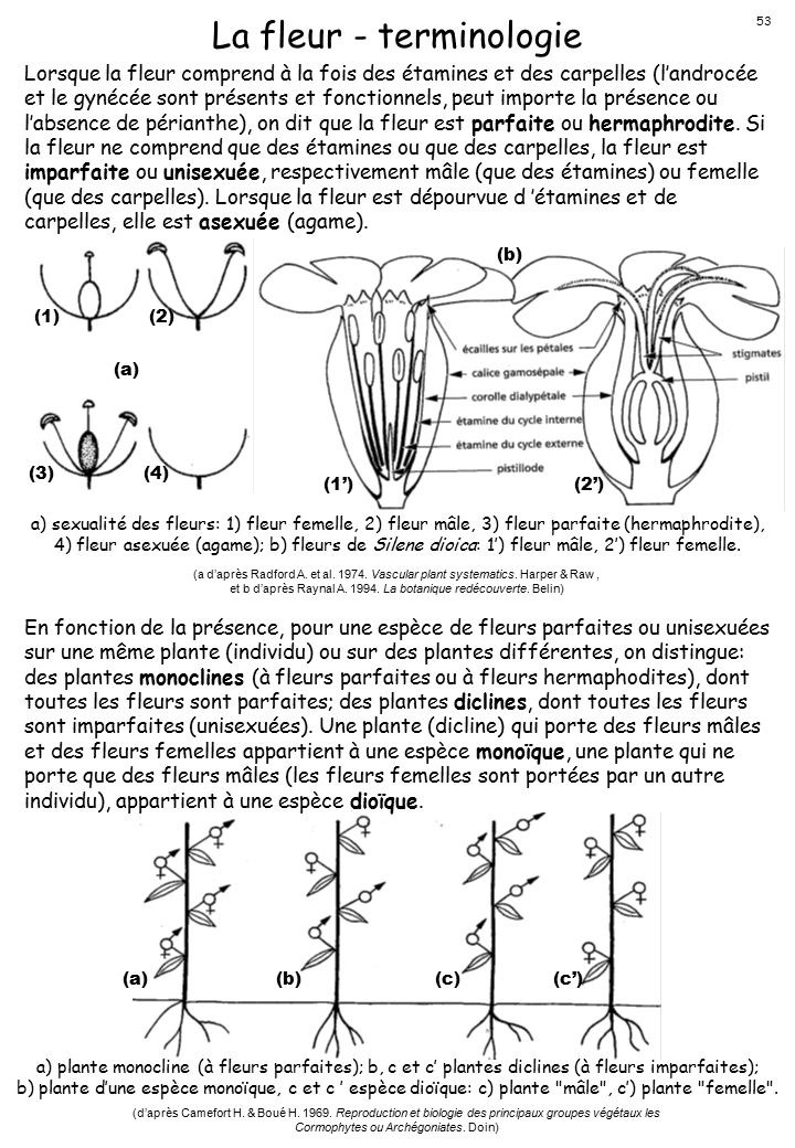 La fleur - terminologie
