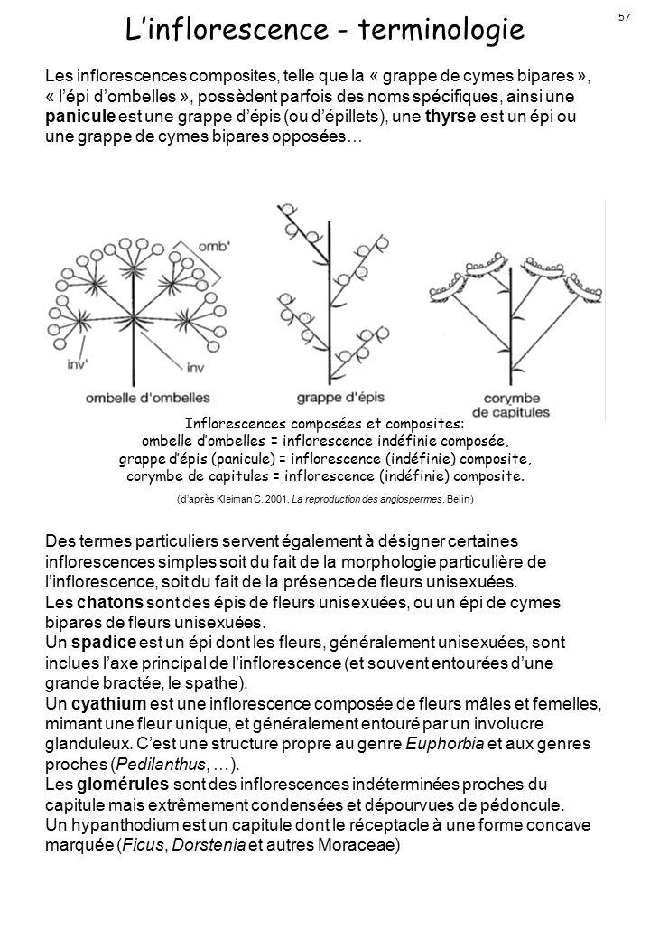 L'inflorescence - terminologie