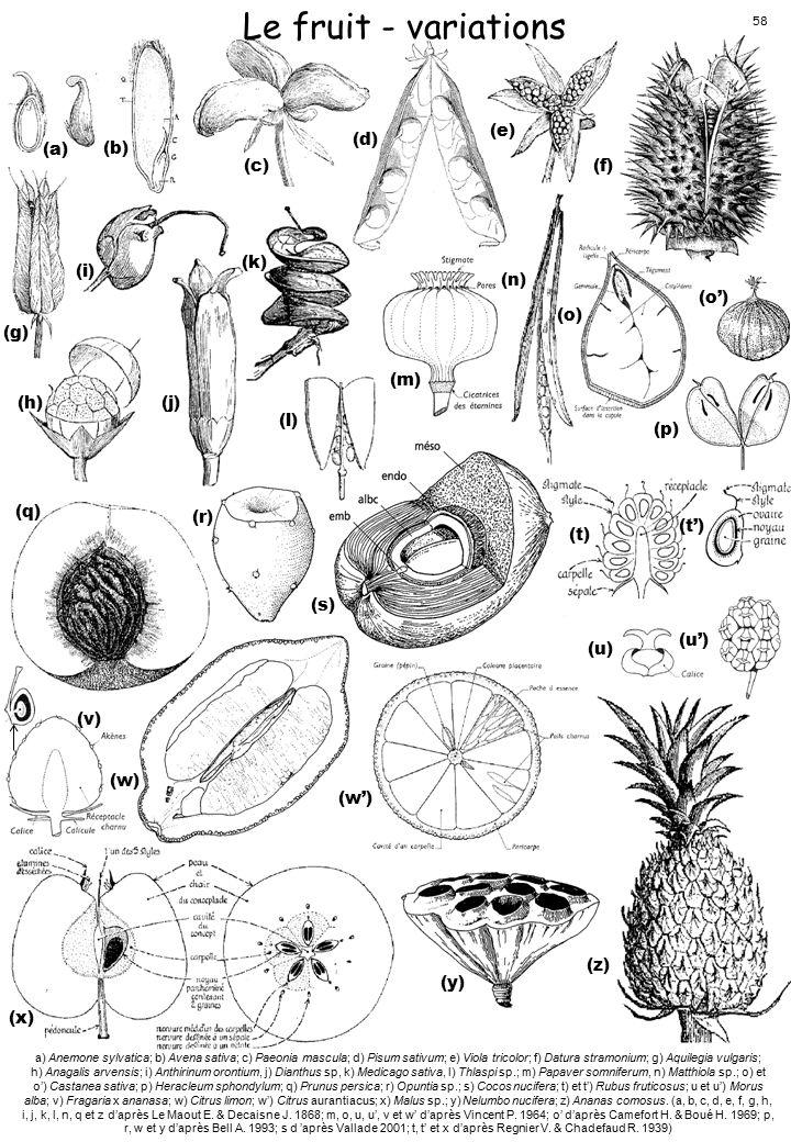 Le fruit - variations (a) (b) (c) (d) (e) (f) (g) (h) (i) (j) (k) (l)