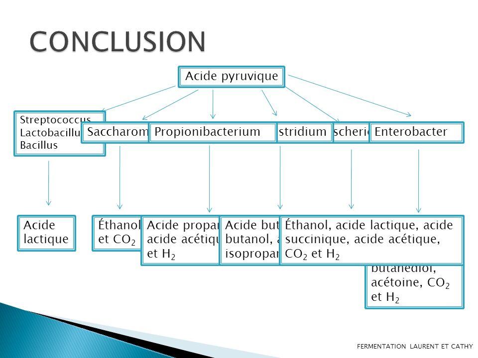CONCLUSION Acide pyruvique Saccharomyces Propionibacterium Clostridium