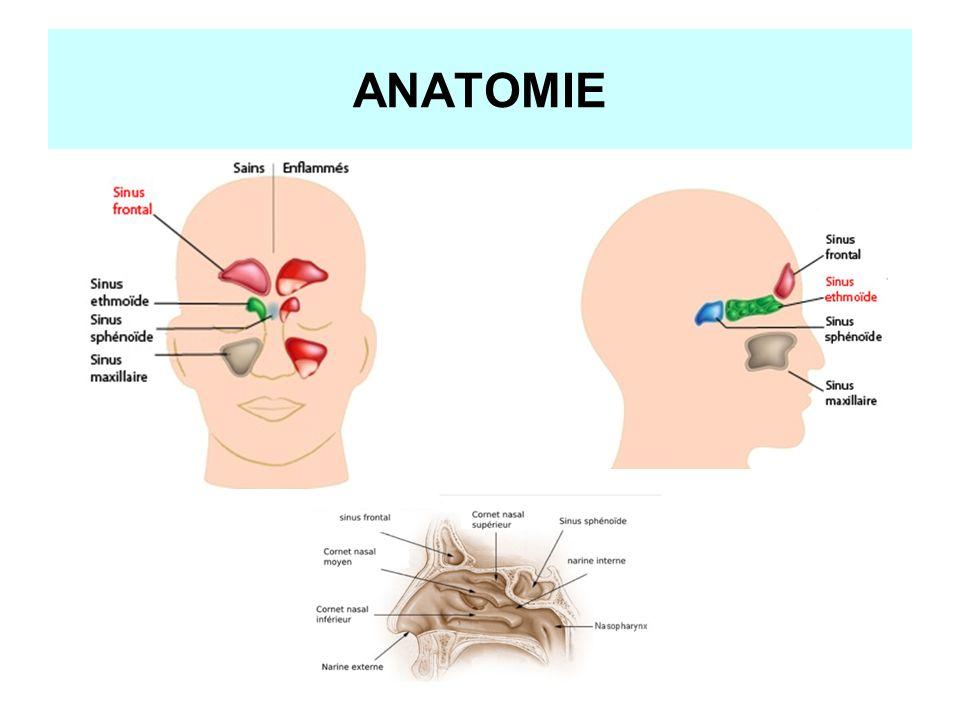 Gemütlich Nase Anatomie Ppt Bilder - Menschliche Anatomie Bilder ...
