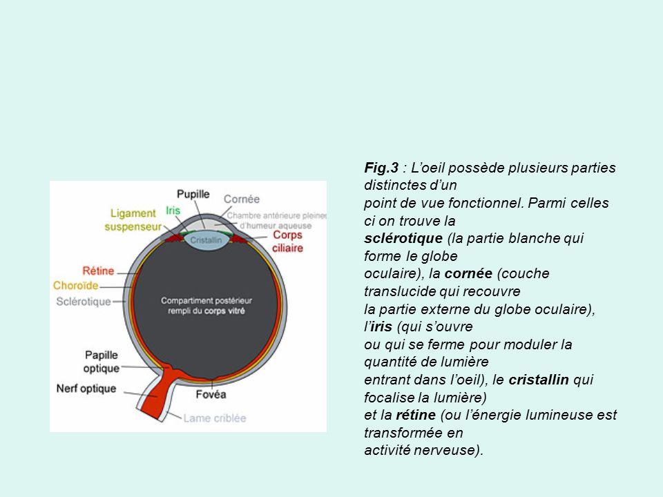 Physiologie de l acuit visuelle ppt video online t l charger - Couche du globe oculaire ...