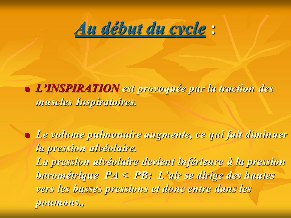 Au début du cycle : L'INSPIRATION est provoquée par la traction des muscles Inspiratoires.