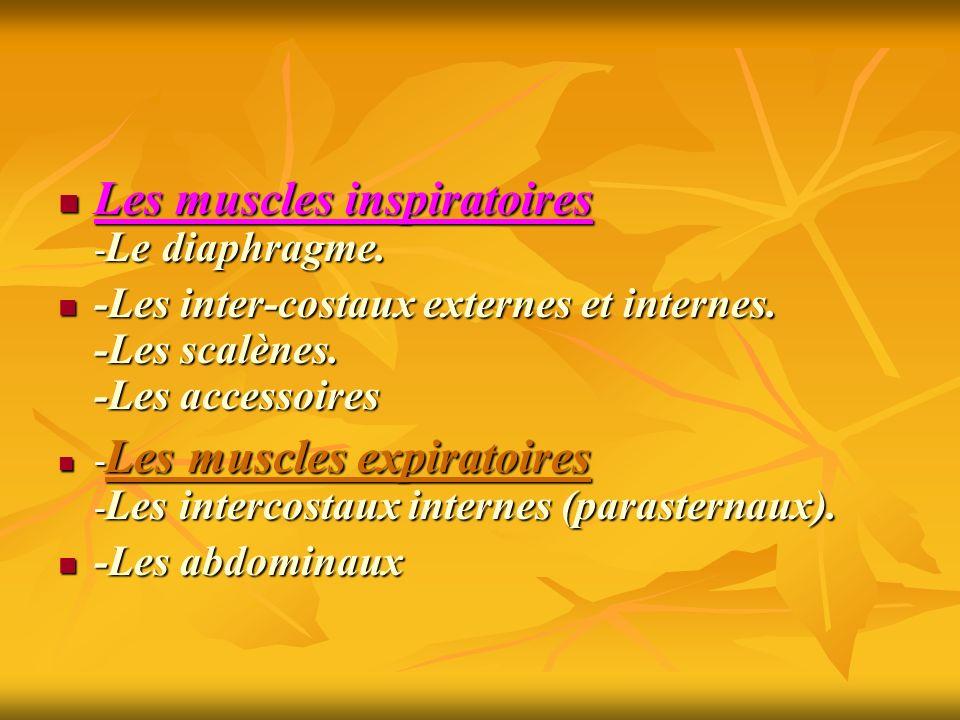 Les muscles inspiratoires -Le diaphragme.