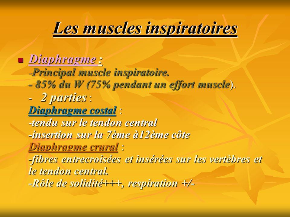 Les muscles inspiratoires