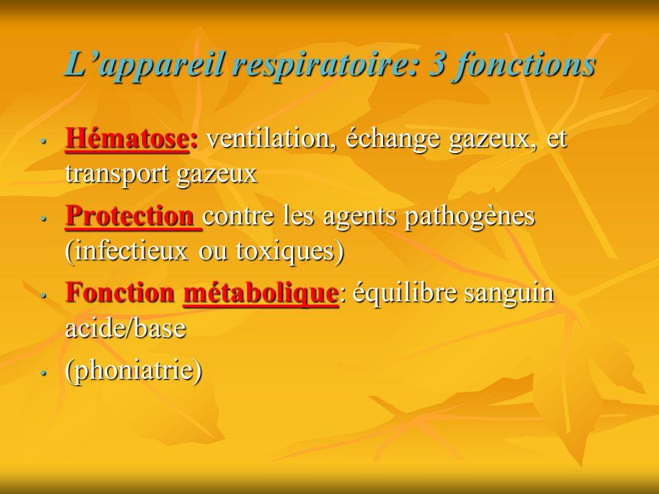 L'appareil respiratoire: 3 fonctions