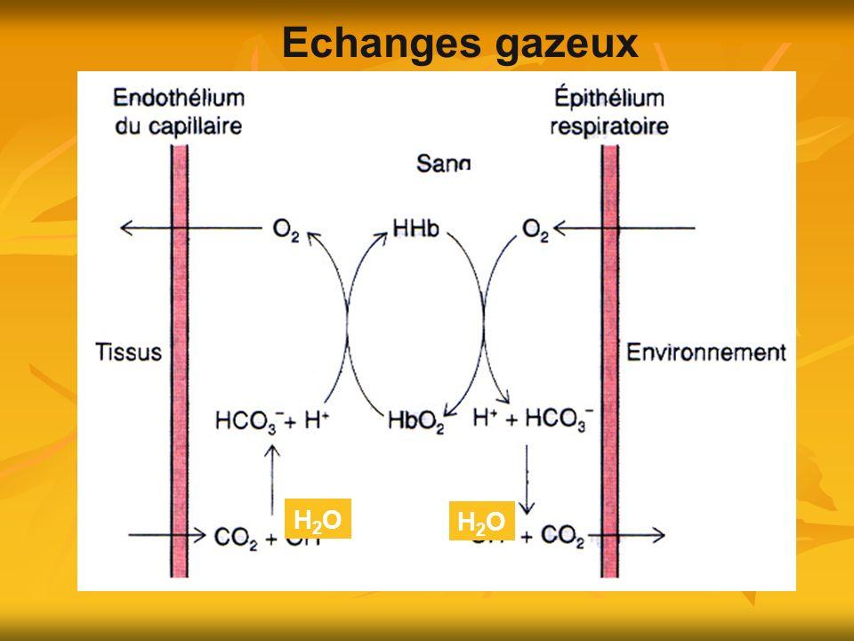 Echanges gazeux H2O H2O