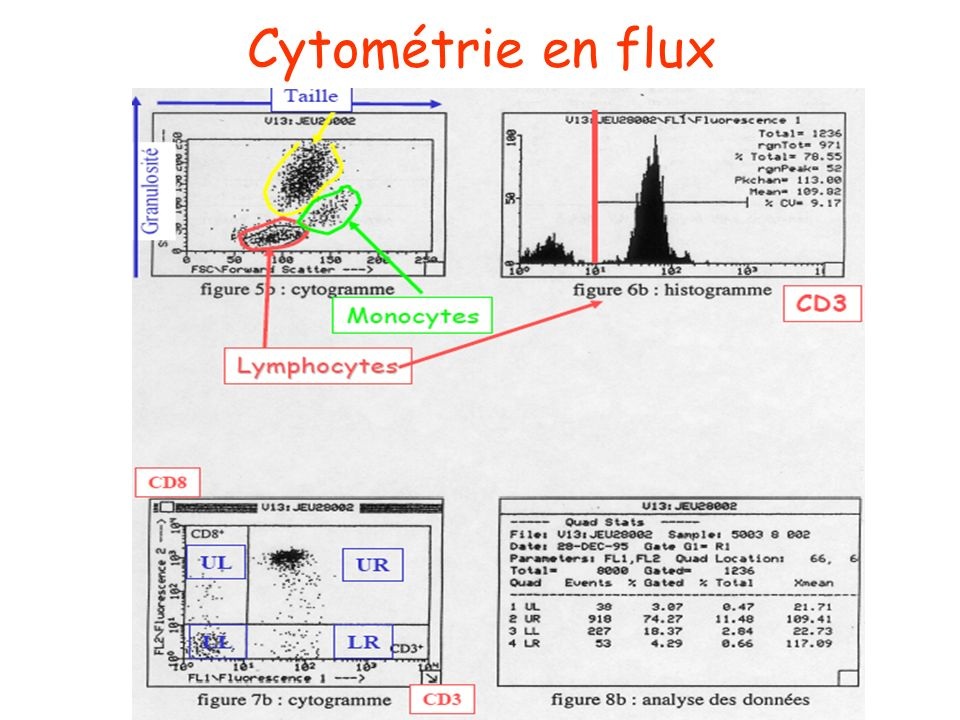 Cytométrie en flux