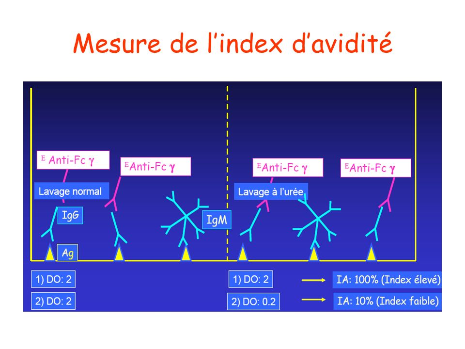 Mesure de l'index d'avidité