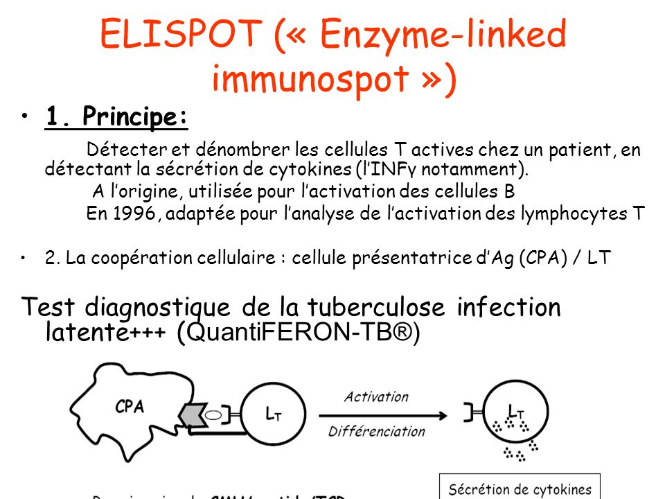 ELISPOT (« Enzyme-linked immunospot »)