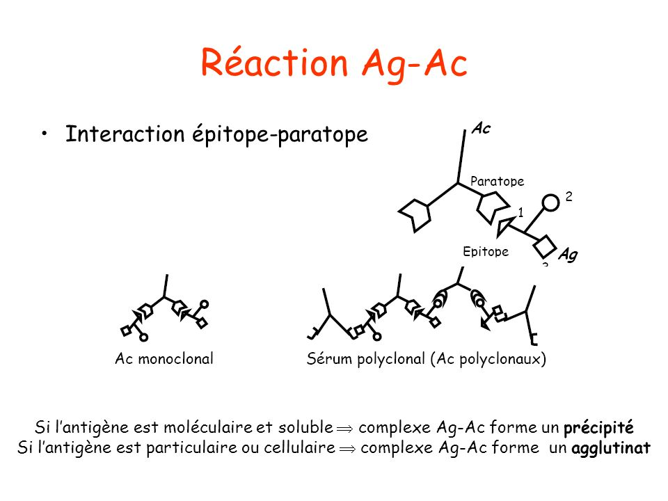 Réaction Ag-Ac Interaction épitope-paratope
