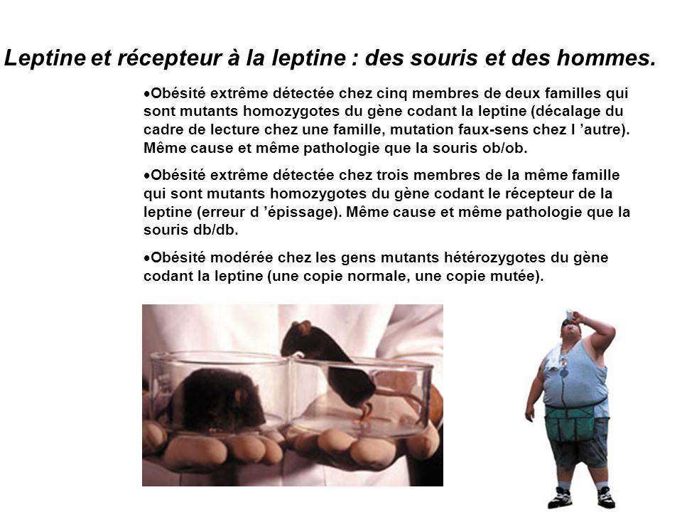 obésité modérée quelles solutions