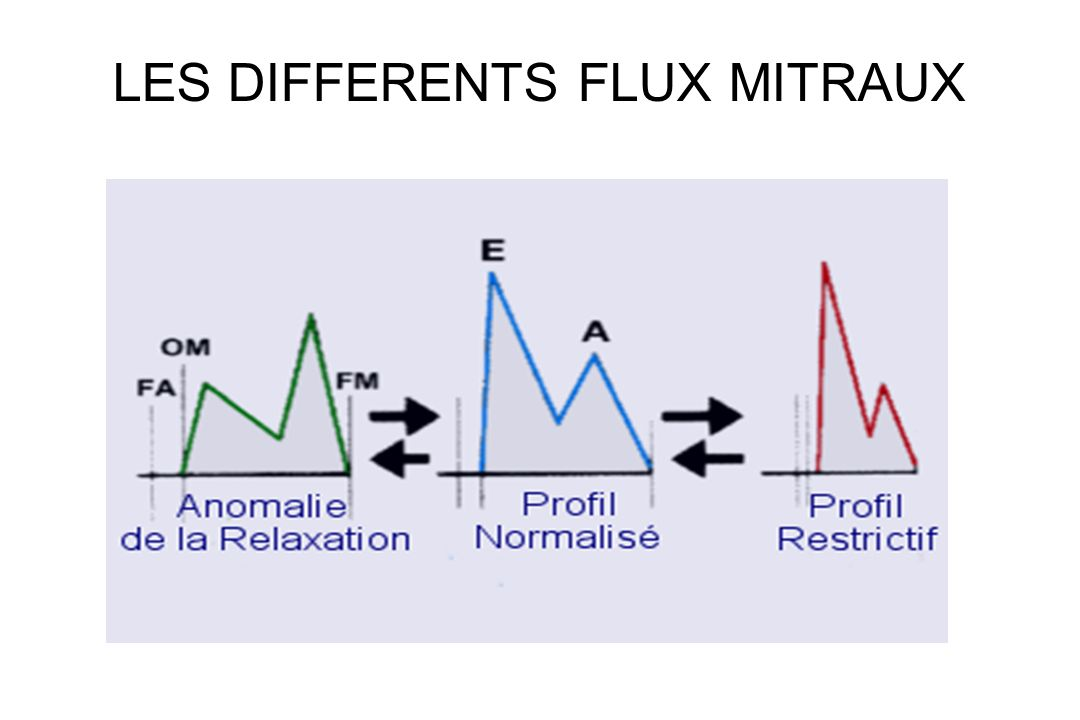 LES DIFFERENTS FLUX MITRAUX