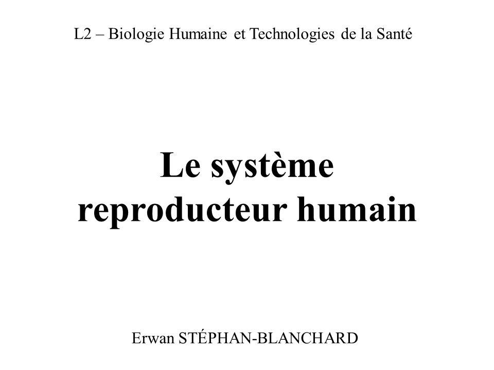 Le système reproducteur humain