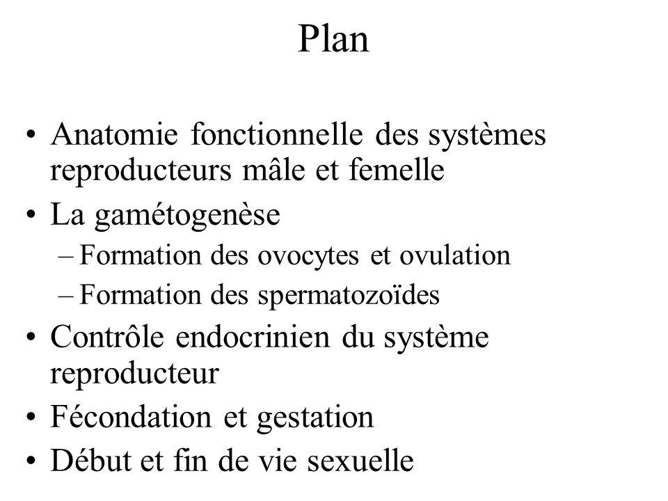 Plan Anatomie fonctionnelle des systèmes reproducteurs mâle et femelle