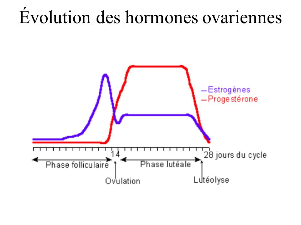 Évolution des hormones ovariennes