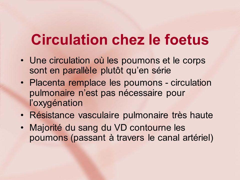 Circulation chez le foetus