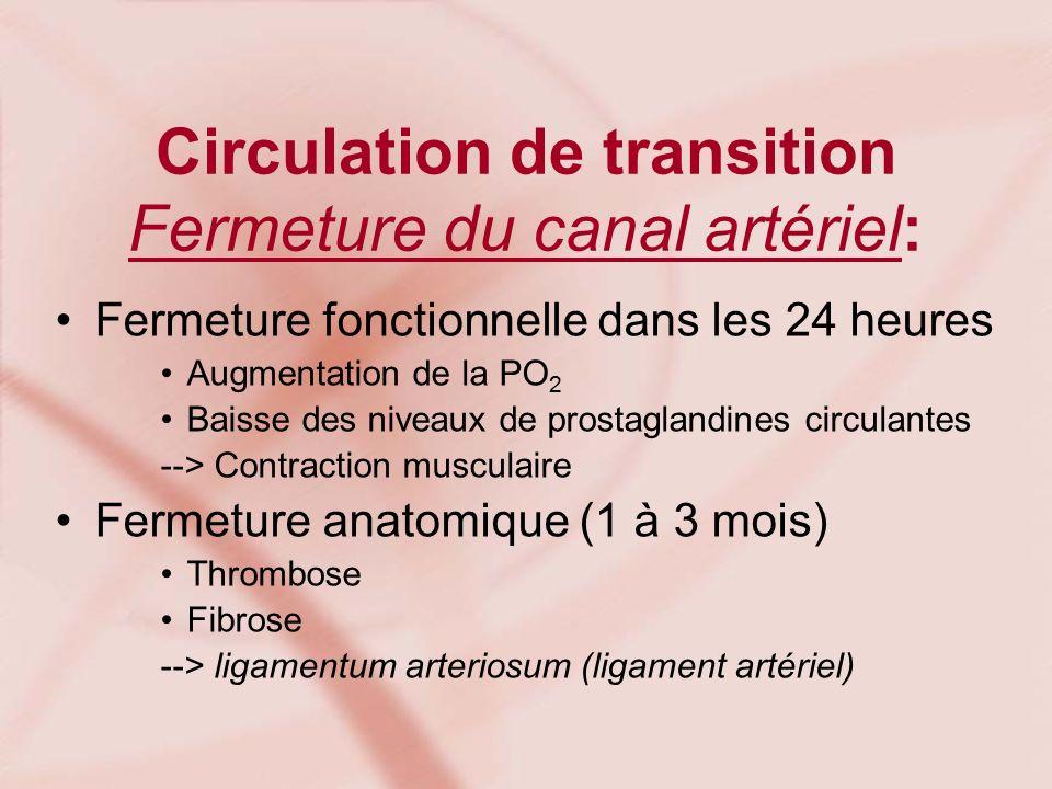 Circulation de transition Fermeture du canal artériel: