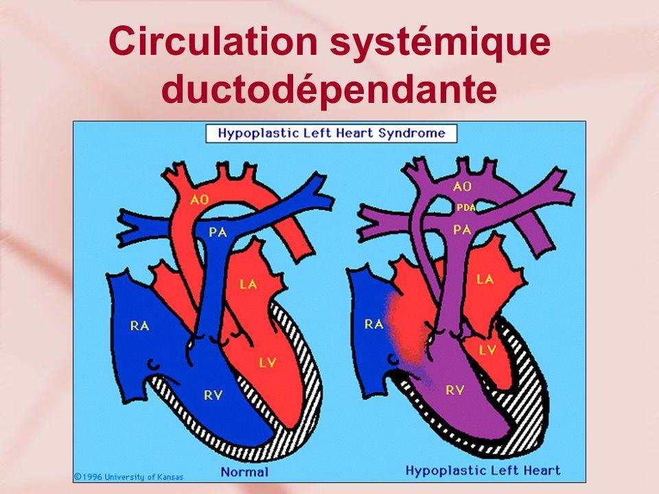 Circulation systémique ductodépendante