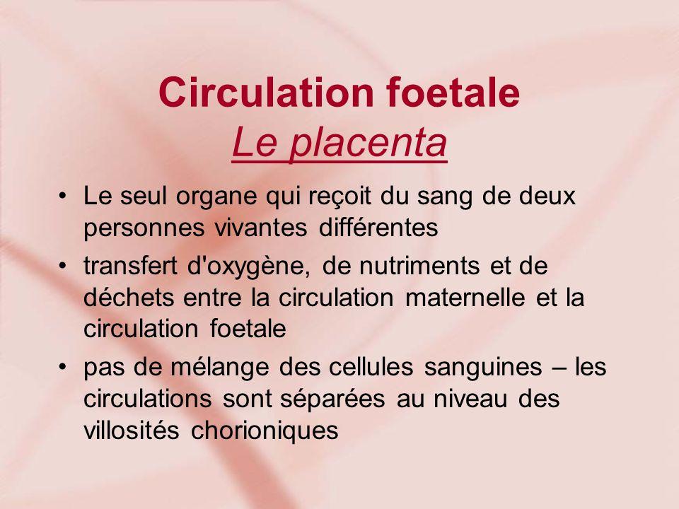 Circulation foetale Le placenta