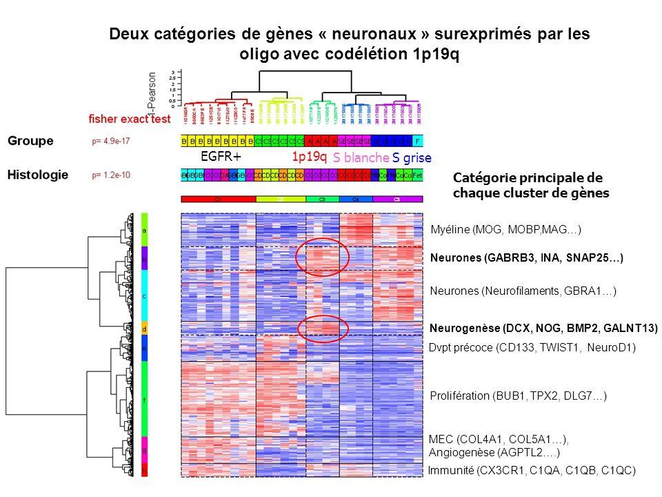 Neurones (GABRB3, INA, SNAP25…) Neurogenèse (DCX, NOG, BMP2, GALNT13)