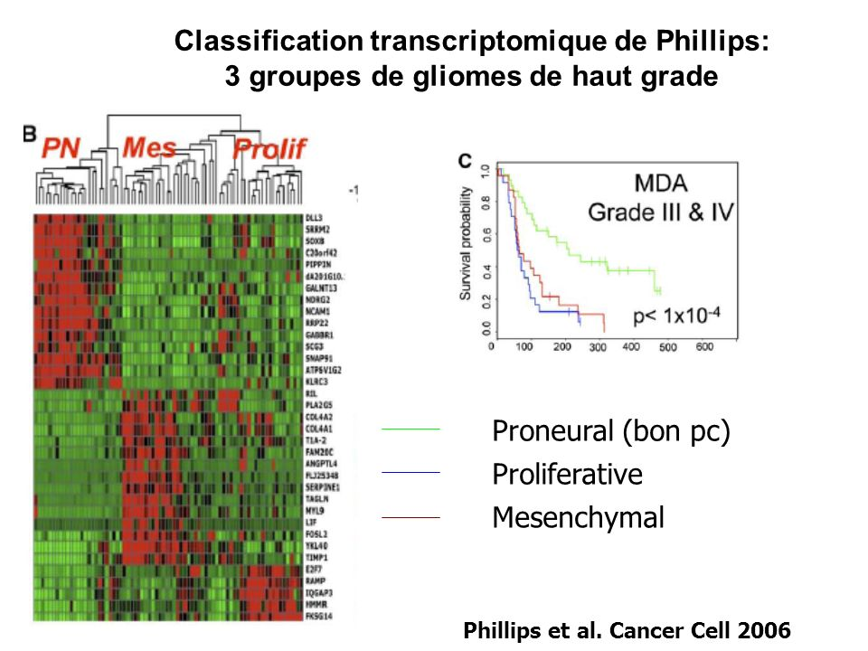 Classification transcriptomique de Phillips: 3 groupes de gliomes de haut grade