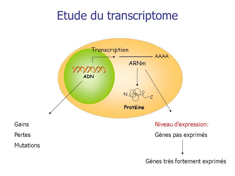 Etude du transcriptome