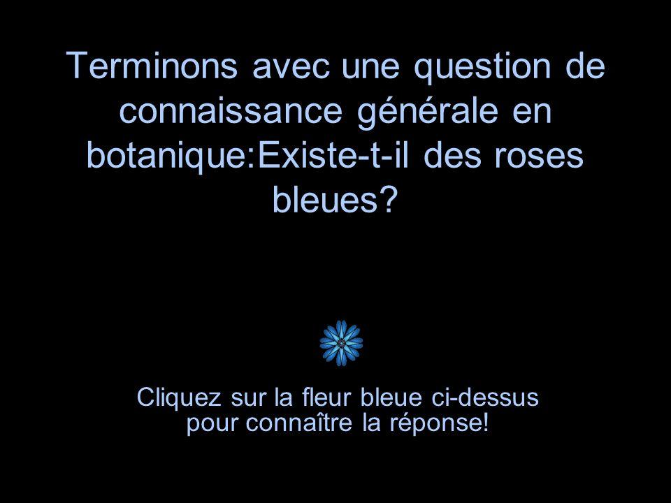 Cliquez sur la fleur bleue ci-dessus pour connaître la réponse!