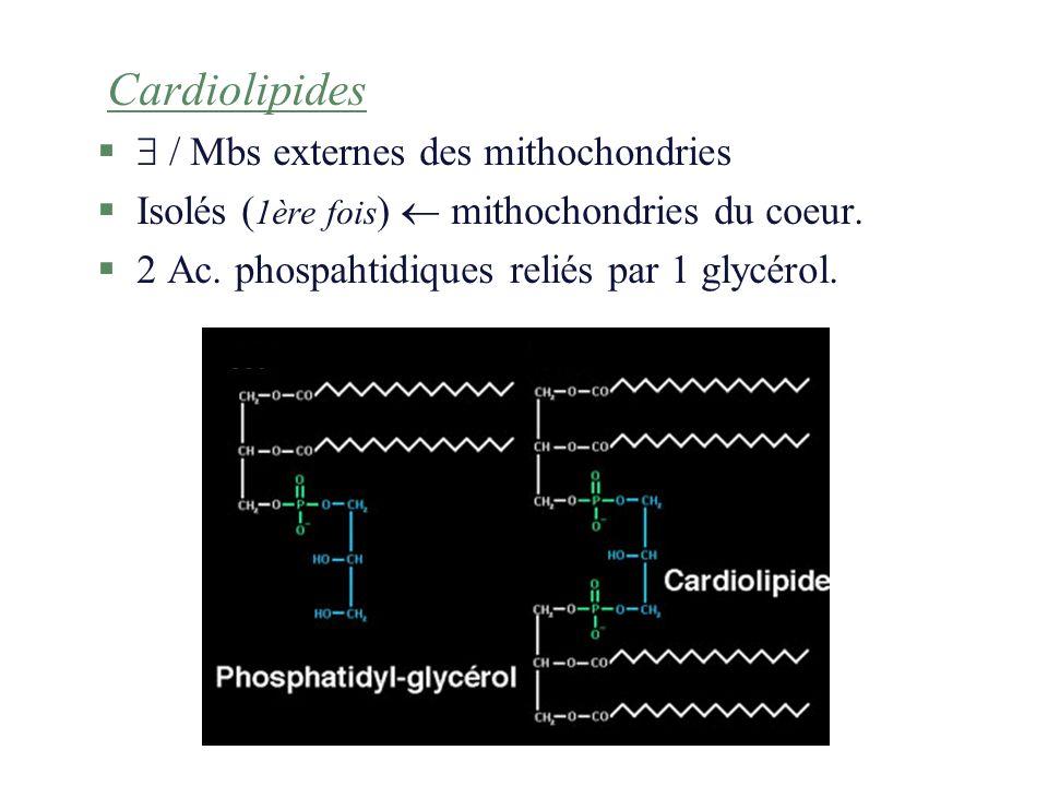Cardiolipides / Mbs externes des mithochondries.Isolés (1ère fois)  mithochondries du coeur.