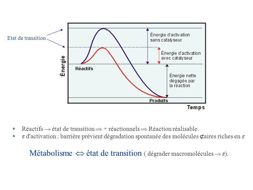 Métabolisme  état de transition ( dégrader macromolécules  ).