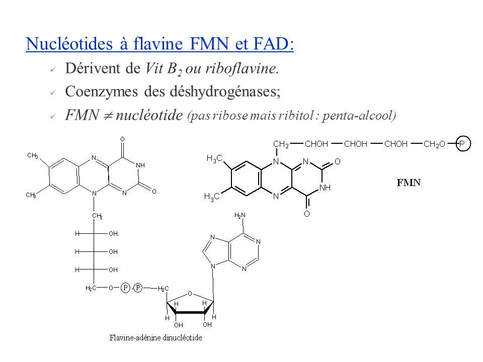 Nucléotides à flavine FMN et FAD:
