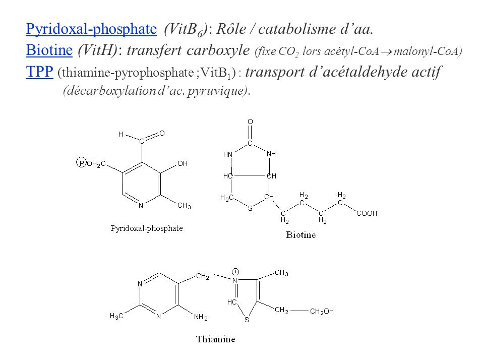 Pyridoxal-phosphate (VitB6): Rôle / catabolisme d'aa.