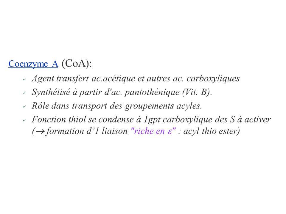 Coenzyme A (CoA):Agent transfert ac.acétique et autres ac. carboxyliques. Synthétisé à partir d ac. pantothénique (Vit. B).