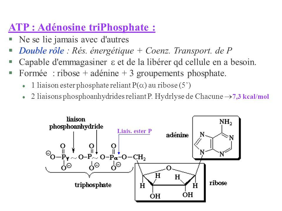 ATP : Adénosine triPhosphate :